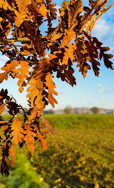 Branch Division Landscapes Sapling Nature Leaves G