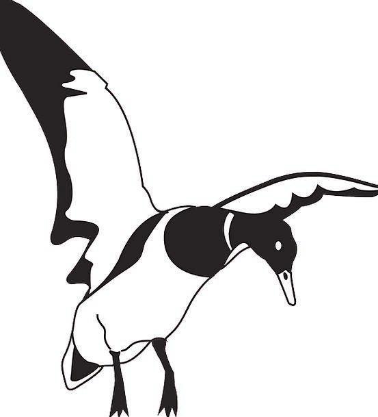 Black Dark Snowy Bird Fowl White Duck Stoop Free V