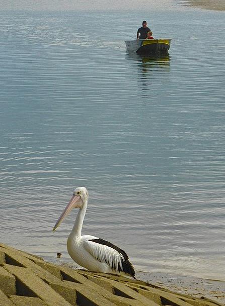 Pelican Boat Ship Fisherman Angler Nautical Recrea