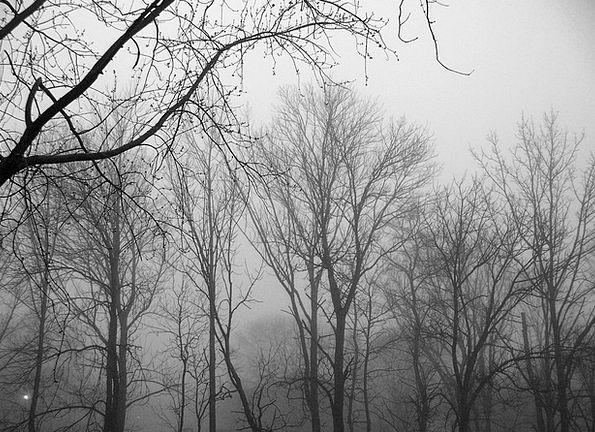 Trees Plants Landscapes Mist Nature Forest Woodlan