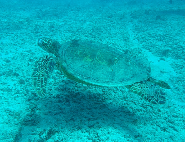 Turtle Landscapes Nature Sea Turtle Sea Wildlife R