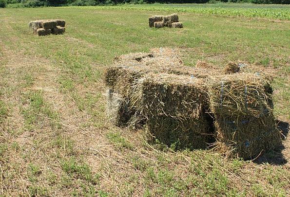 Agriculture Farming Bales Bundles Alfalfa Square F