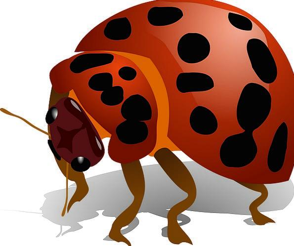 Ladybug Germ Insect Bug Red Bloodshot Ladybird Mac