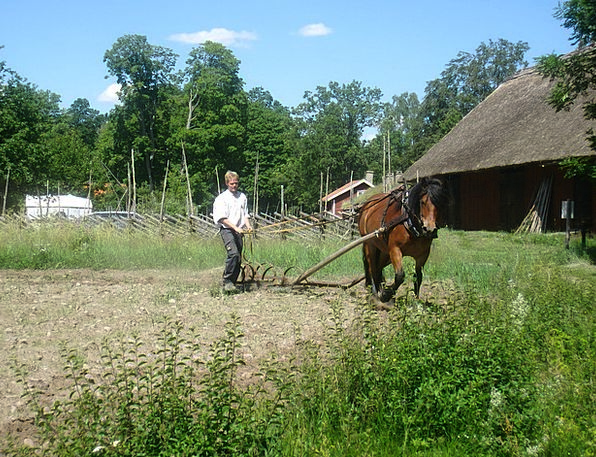 Countryside Scenery Mount Man Gentleman Horse Gree