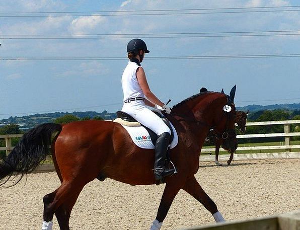 Horse Mount Equine Horsey Horserider Horseriding C