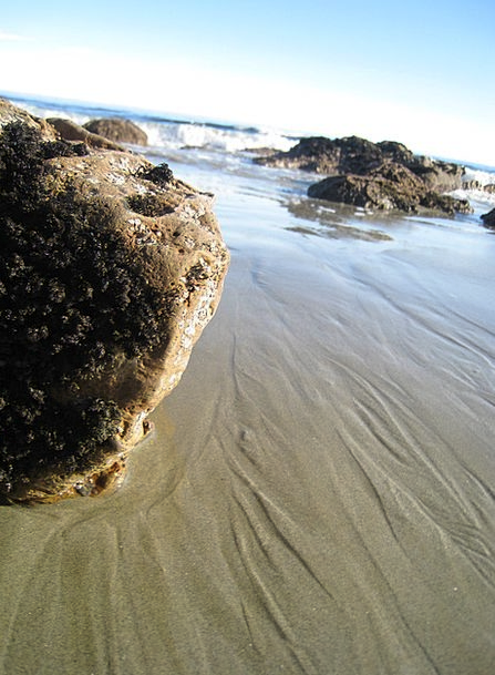 Moeraki Boulders Vacation Marine Travel New Zealan