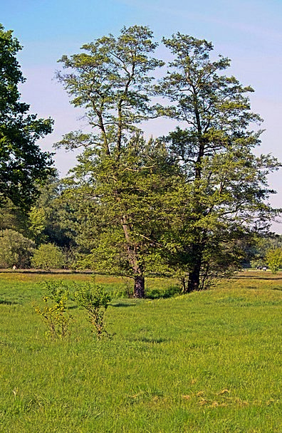 Black Alder Landscapes Plants Nature Nature Countr