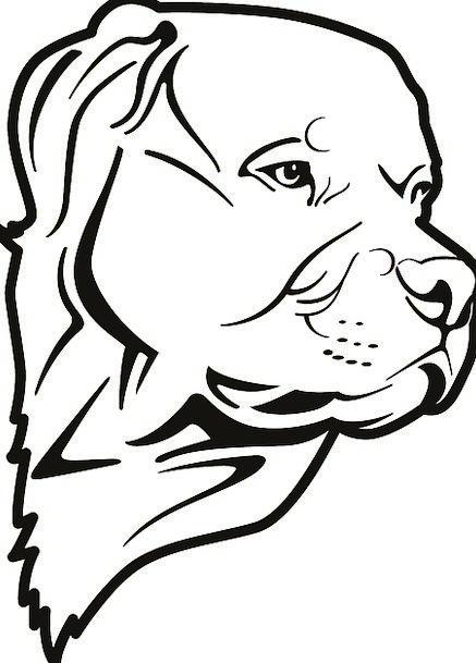 Pit Mine Decree Dog Bull Domestic Pet Domesticated