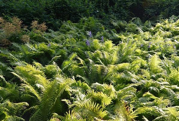 Ferns Leaves Landscapes Arena Nature Forest Woodla