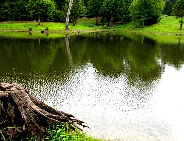 Pond Pool Landscapes Aquatic Nature Green Lime Wat