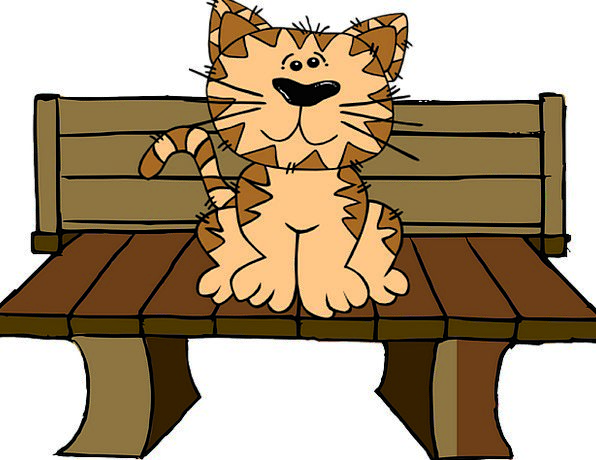 Cat Feline Seat Sit Be seated Bench Cute Attractiv
