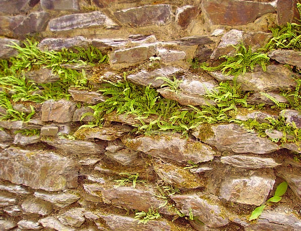 Ferns Leaves Landscapes Entangling Nature Stone Wa