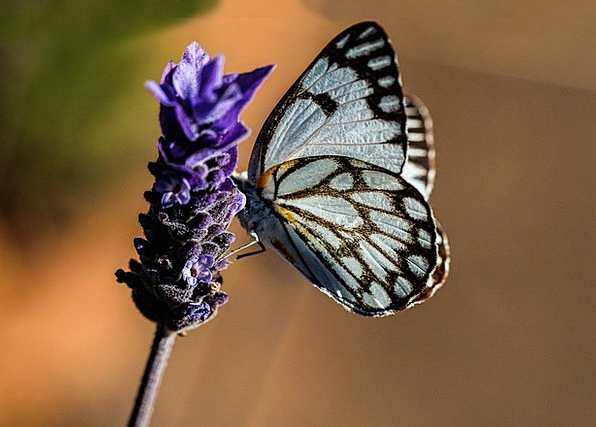 Butterfly Landscapes Azure Nature Nature Countrysi