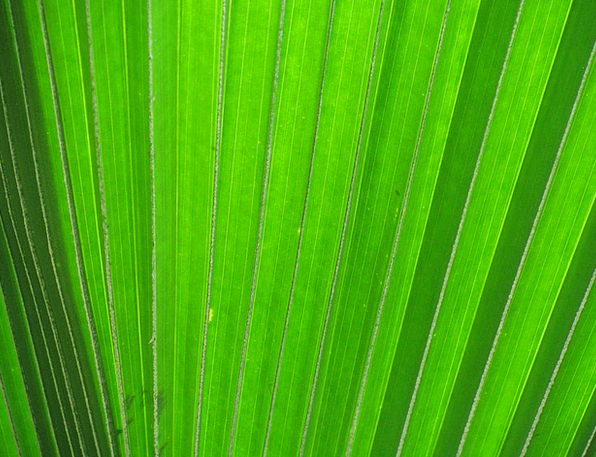 James Textures Periodical Backgrounds Palm Fronds
