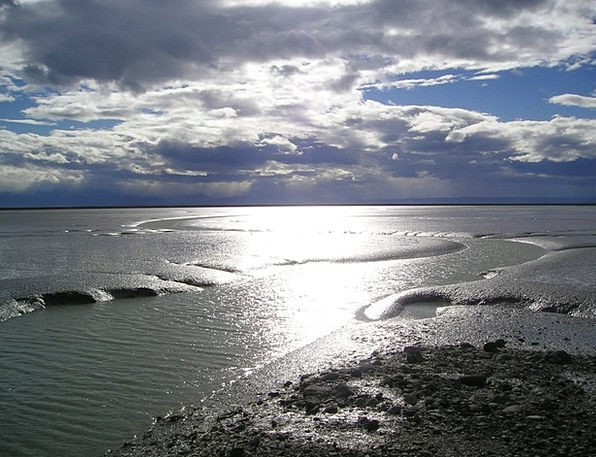 New Zealand Marine Wadden Sea Sea Ebb Receding tid