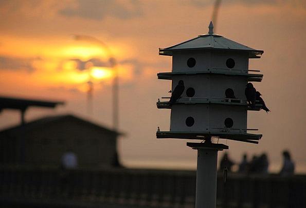 Bird House Vacation Sundown Travel Purple Martins