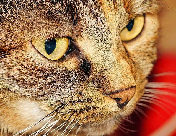 Cat Feline Skull Female Feminine Head Curious Cat