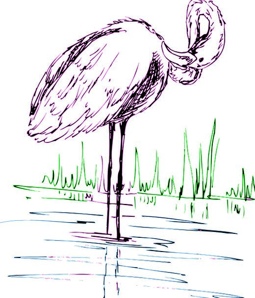 Flamingo Aquatic Bird Fowl Water Grass Lawn Free V