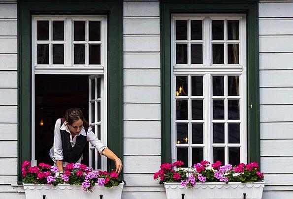 Windows Gaps Fashion Gap Beauty Flowers Plants Win