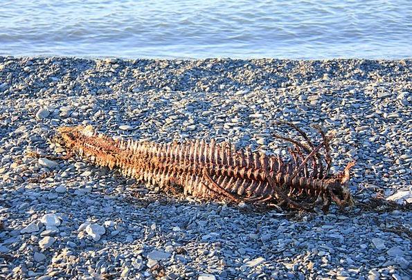 Spine Back Skeletal Emaciated Ben Seal Closure