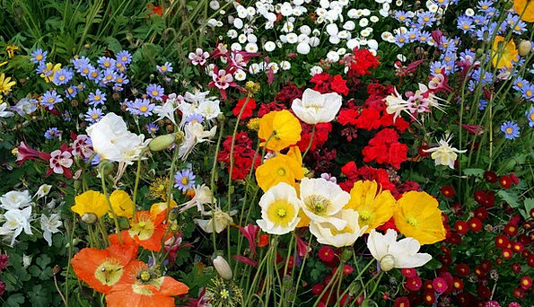 Spring Coil Plants Poppy Flowers Tabitha Feel Love
