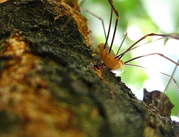 Spider Landscapes Limbs Nature Long Legs Legs Arac