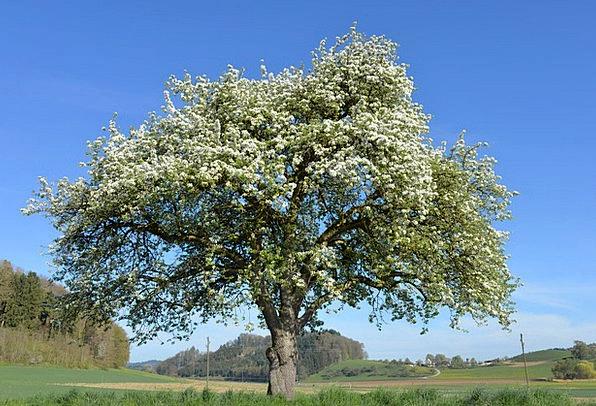 Apple Tree Landscapes Nature Flowers Plants Apple