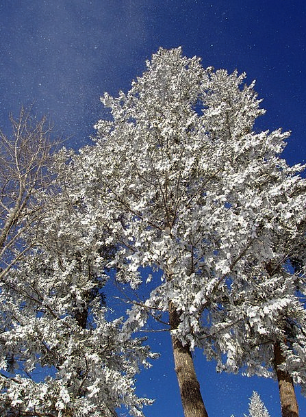 Trees Plants Landscapes Snowflake Nature Covered E