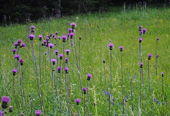 Flowers Plants Colorful Interesting Purple Flowers