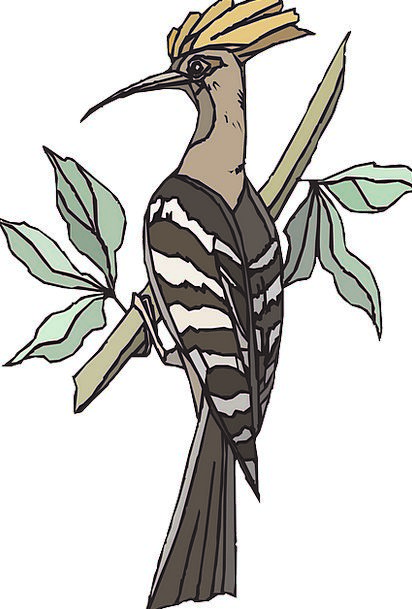 Hoopoe Sapling Bird Fowl Tree Branch Division Bree