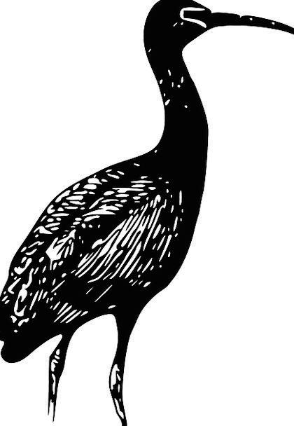 Ibis Wading Bird Ibises Waterfowl Duck Bird Free V