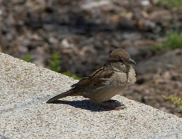 Bird Fowl Close Near Sparrow Bill Fly Hover Animal