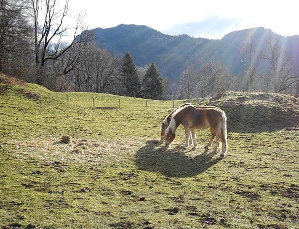 Horse Mount Landscapes Field Nature Alm Meadow Pas
