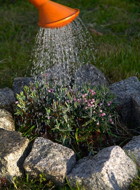 Watering Soaking Horticultural Plants Florae Garde