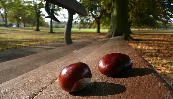 Chestnuts Anecdotes Textures Seat Backgrounds Two