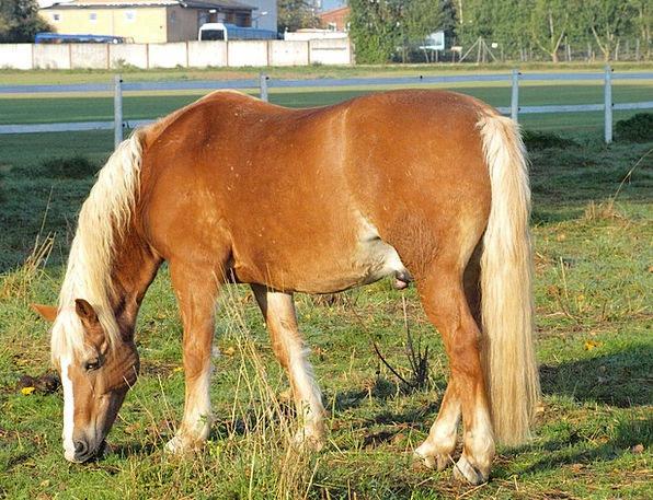Horse Mount Drink Link Food Pasture Meadow Couplin