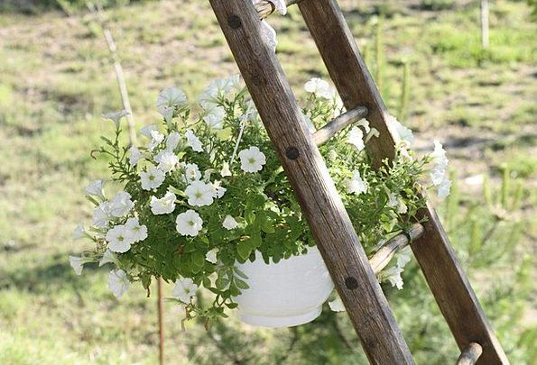 Plant Vegetable Landscapes Vessel Nature Scale Gau
