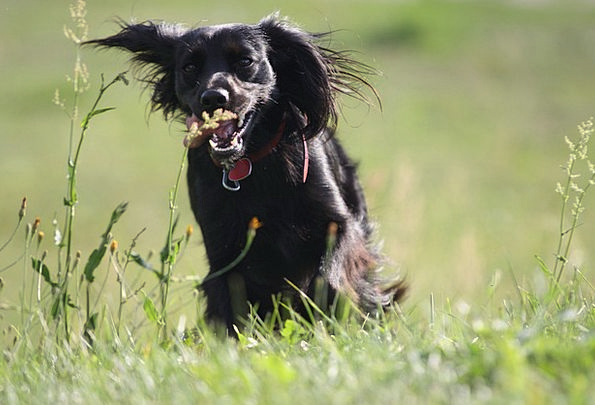 Animal Physical Canine Meadow Field Dog Jogging Nu