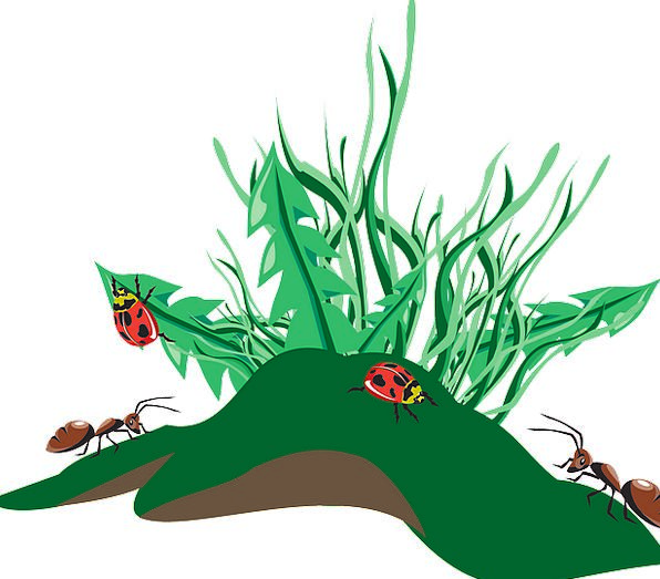Grass Lawn Bugs Dirt Grime Insects Weeds Wildflowe