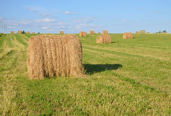 Rolls Reels Landscapes Arena Nature Straw Grass Fi