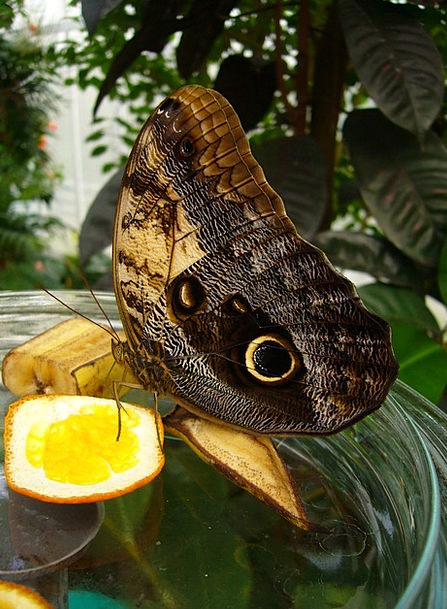 Butterfly Bug Butterfly House Mainau Insect