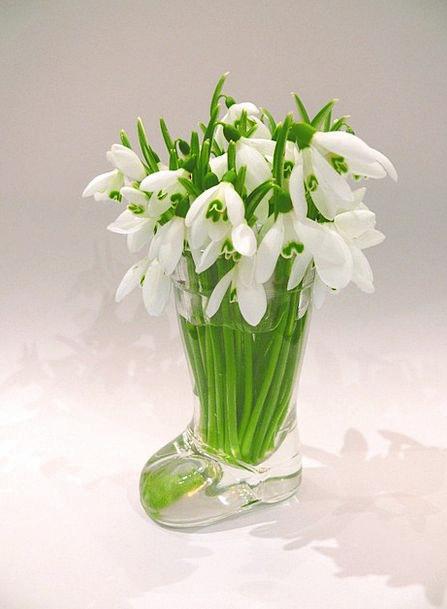 Snowdrops Coil Season Period Spring Flower Floret