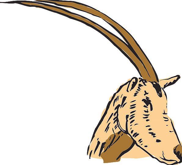 Antelope Skull Horns Sirens Head Long Extended Ani