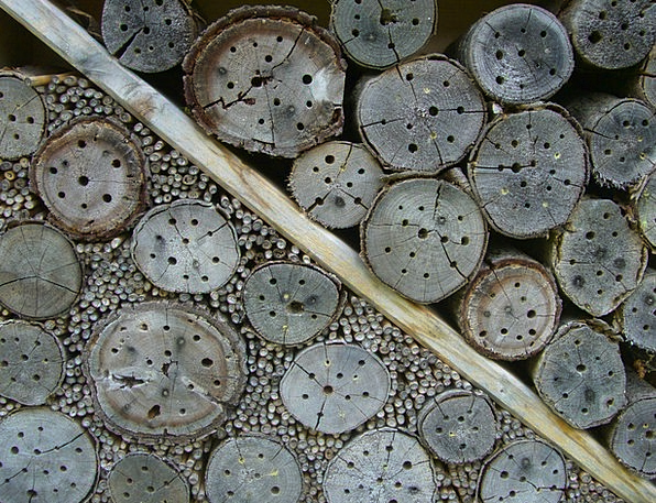 Insect Hotel Drill Holes Nesting Help Wood Entry O