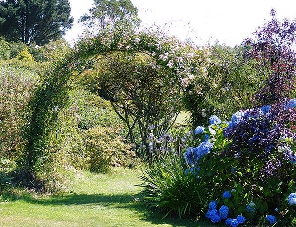 Hydrangea Playful Roses Designs Arch Grass Lawn Su