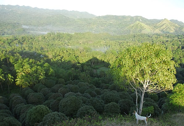 Trees Plants Hot Agriculture Farming Tropical Plan