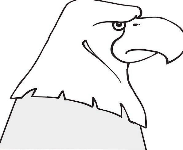 Head Skull Bird Fowl Eagle Bald Bare Beak Free Vec