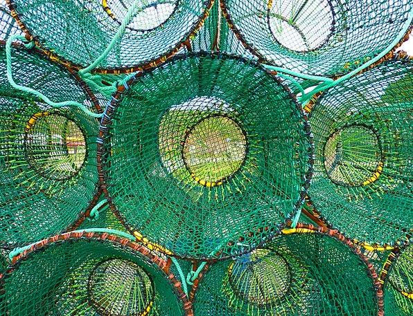 Reuse Recycle Angle Sea Marine Fish Coast Shore Fi