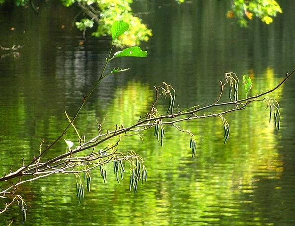 Branch Division Landscapes Understand Nature Natur