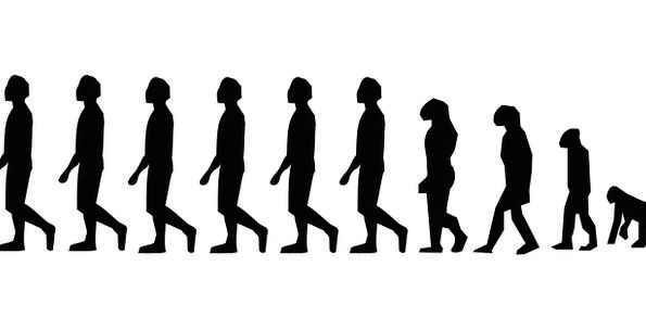 Evolution Development Man Gentleman Charles Darwin